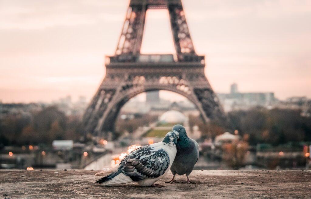 パリのエッフェル塔前にいる鳩