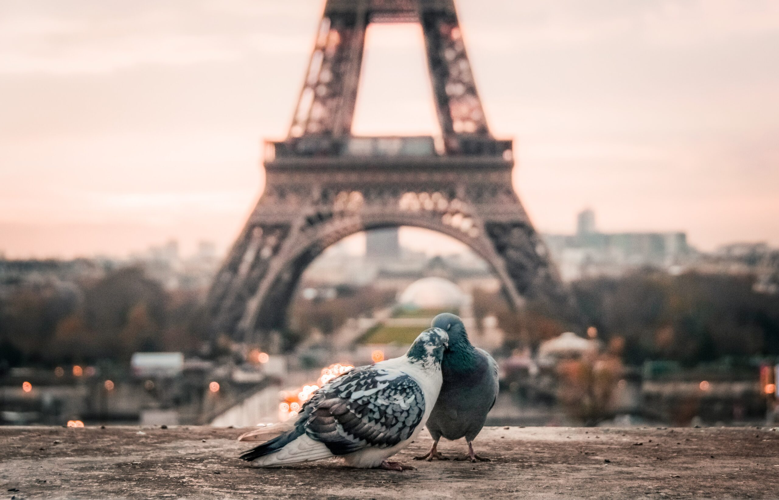 パリエッフェル塔の前に鳩
